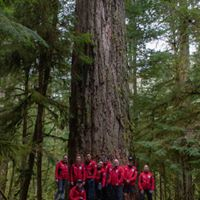 Cathedral Grove WW